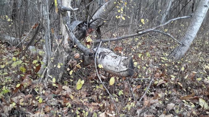 deer_branch